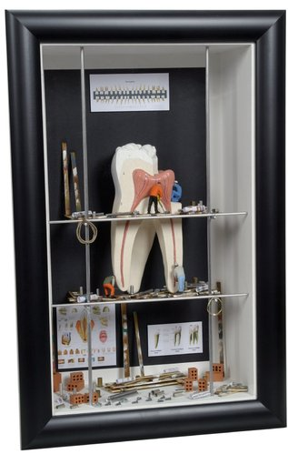 Shadow box medium Endodontics