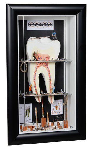 Shadow box medium Tooth with nerv